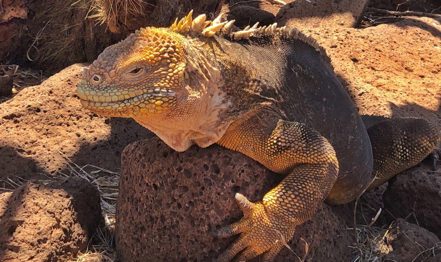 Neues Video über die Galapagos-Inseln